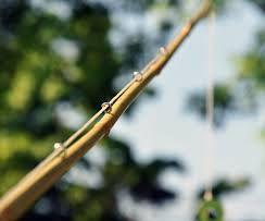 How To Make A Fishing Pole