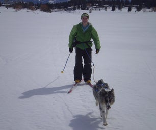 How to Ski Jour With Your Dog