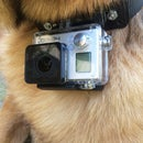GoPro Dog Collar