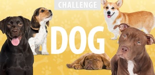 Dog Challenge 2016