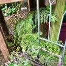 Chair Trellis for Climbing Vines