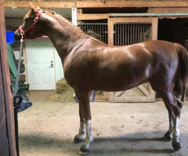 Tacking Up a Dressage Horse