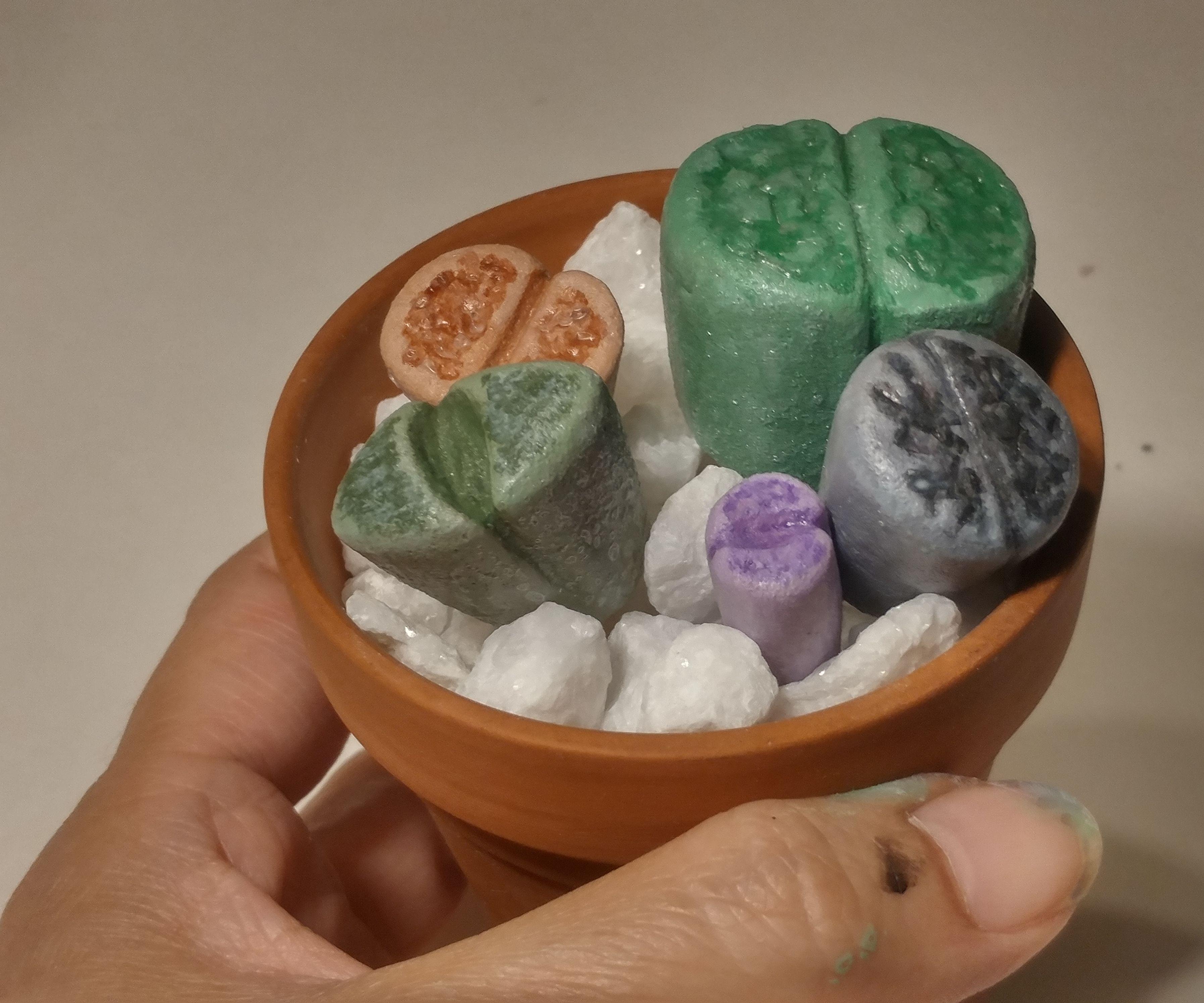 Faux Living Stones (Lithops)