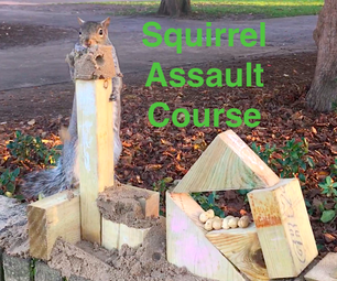 The Squirrel Games - a Battle of Wits, Daring and Nuts