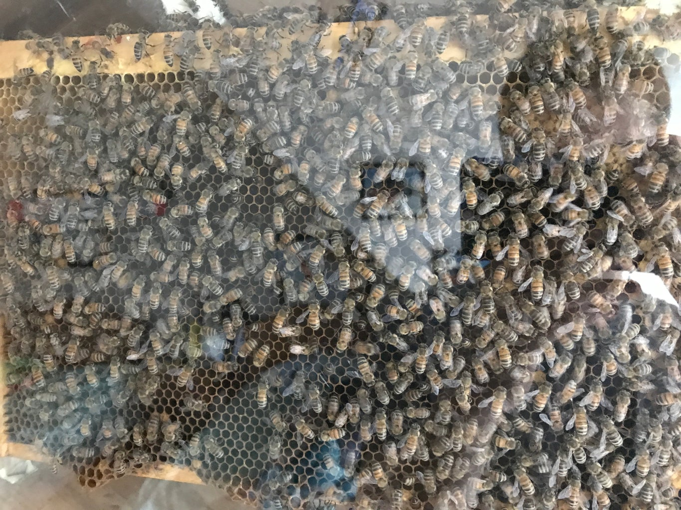 Enjoy Watching Your Bees!