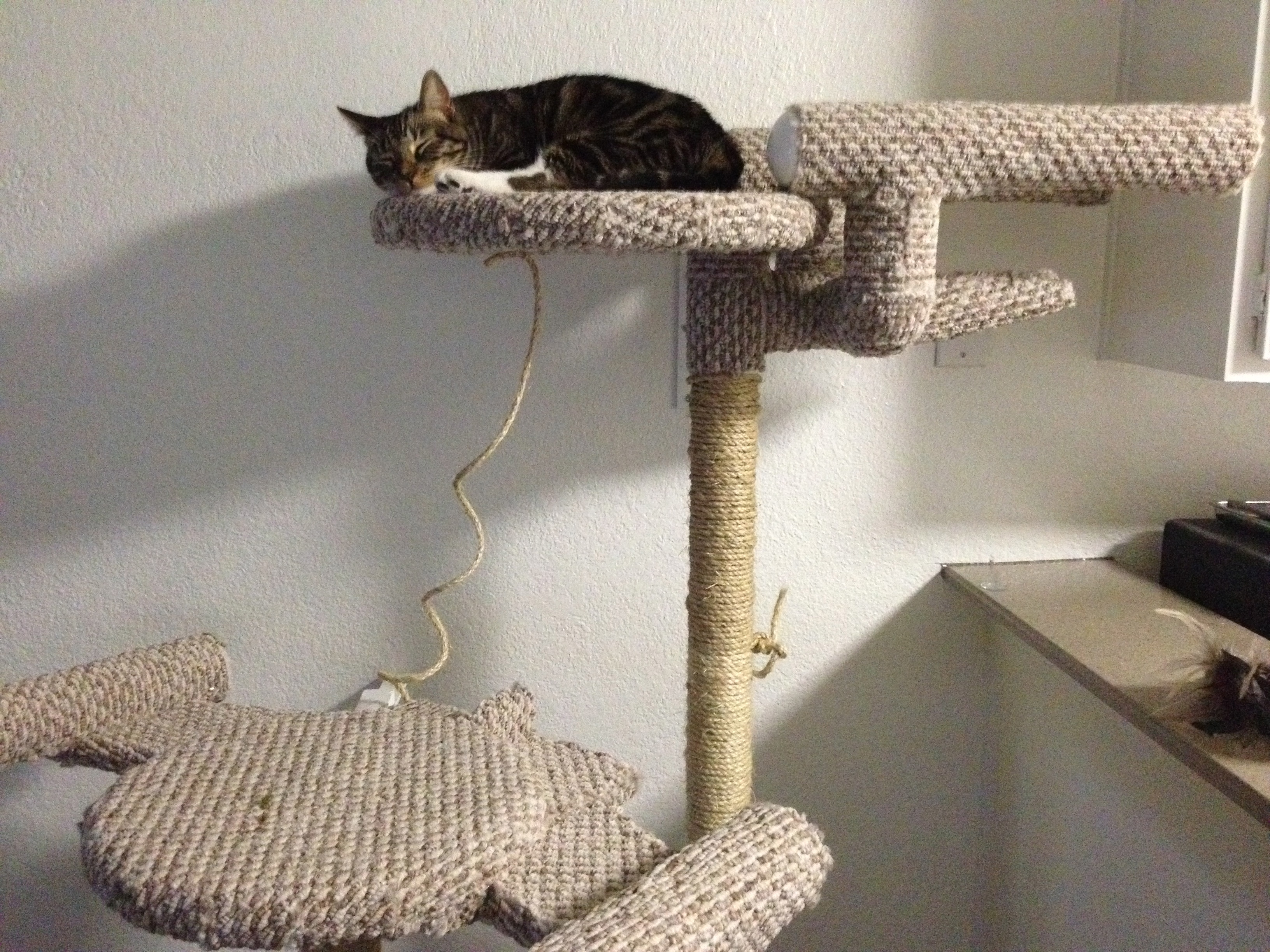 Star Trek Cat Tree (with Enterprise and Romulan Bird of Prey)