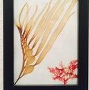 Sea Flora Art: Easy Algae Herbarium Specimens!