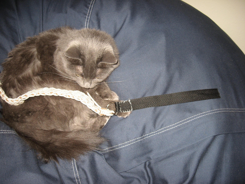 Parachute Cord Belt