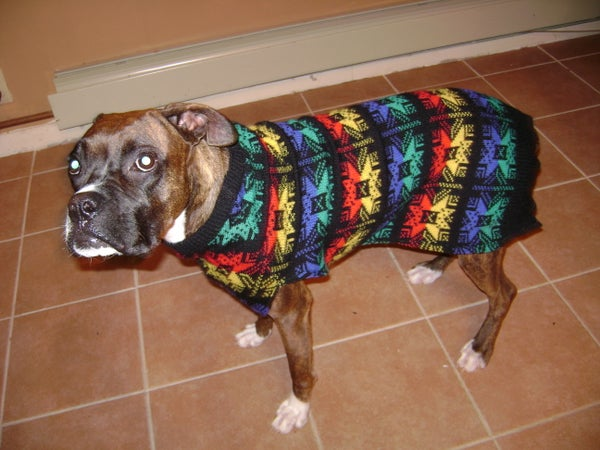Ugly Dog Sweater