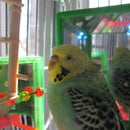 LED color changing Bird toy!