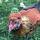 Life Is Better With Chickens in a Pumpkin Sweater