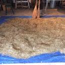 Finishing Wild Rice