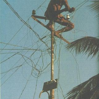 jungle-wiring.jpg