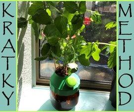 Mini Kratky Jars - Easy Hydroponics