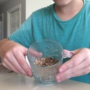 How To Grow Wheatgrass In A Cup