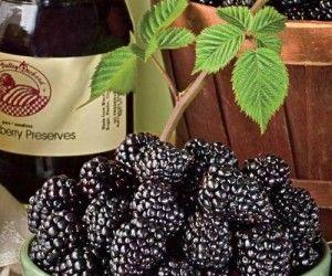 Tasty homemade blackberry wine