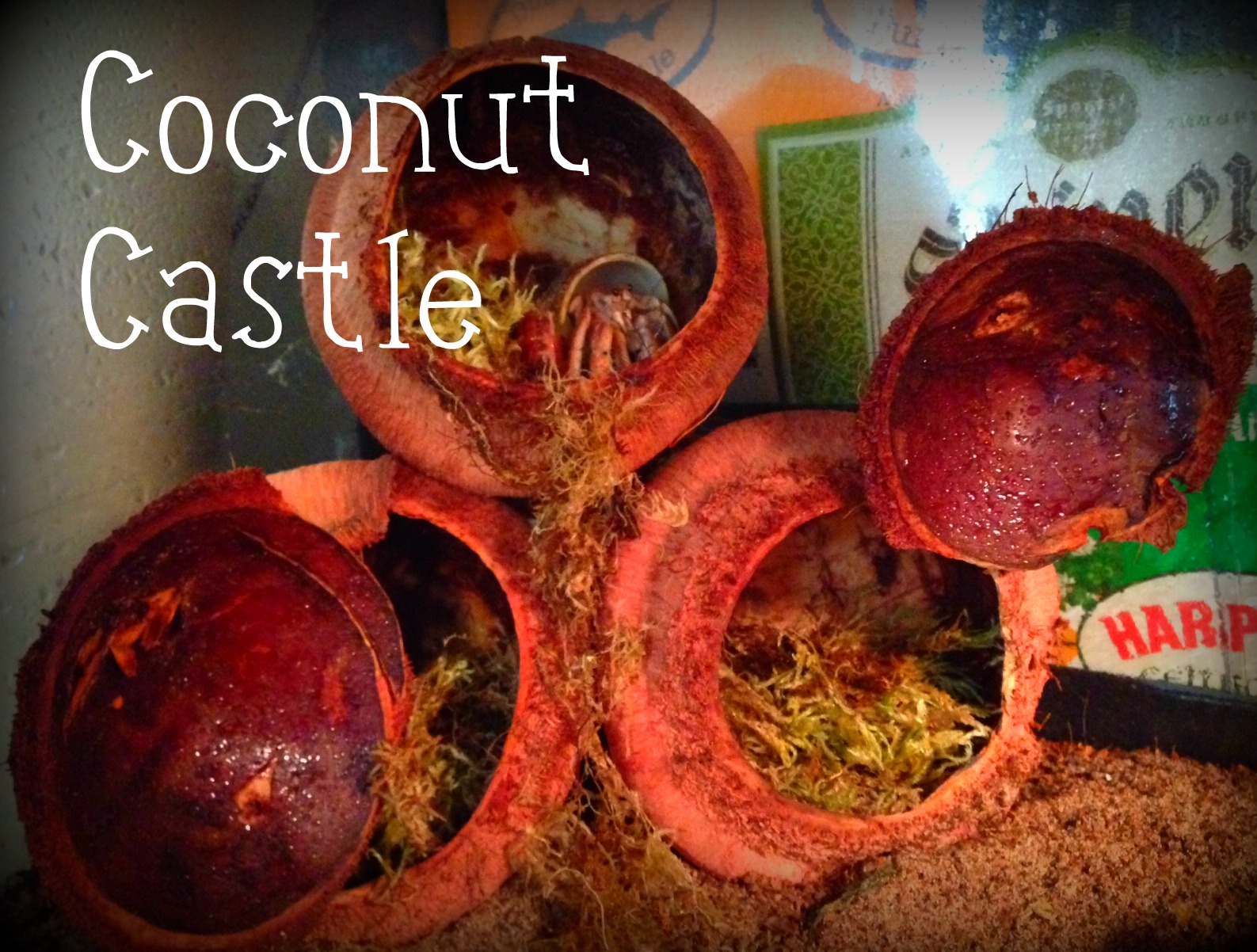 How to spoil your hermit crabs: Coconut Castle