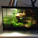 Viviarum fauna Plant Tank