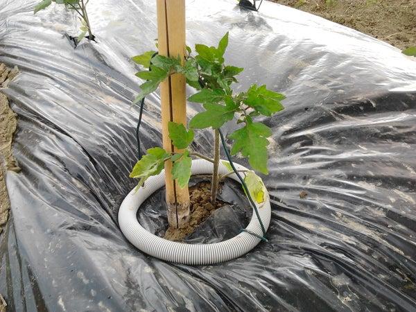 Simple Block Weeds and Water Conveyor