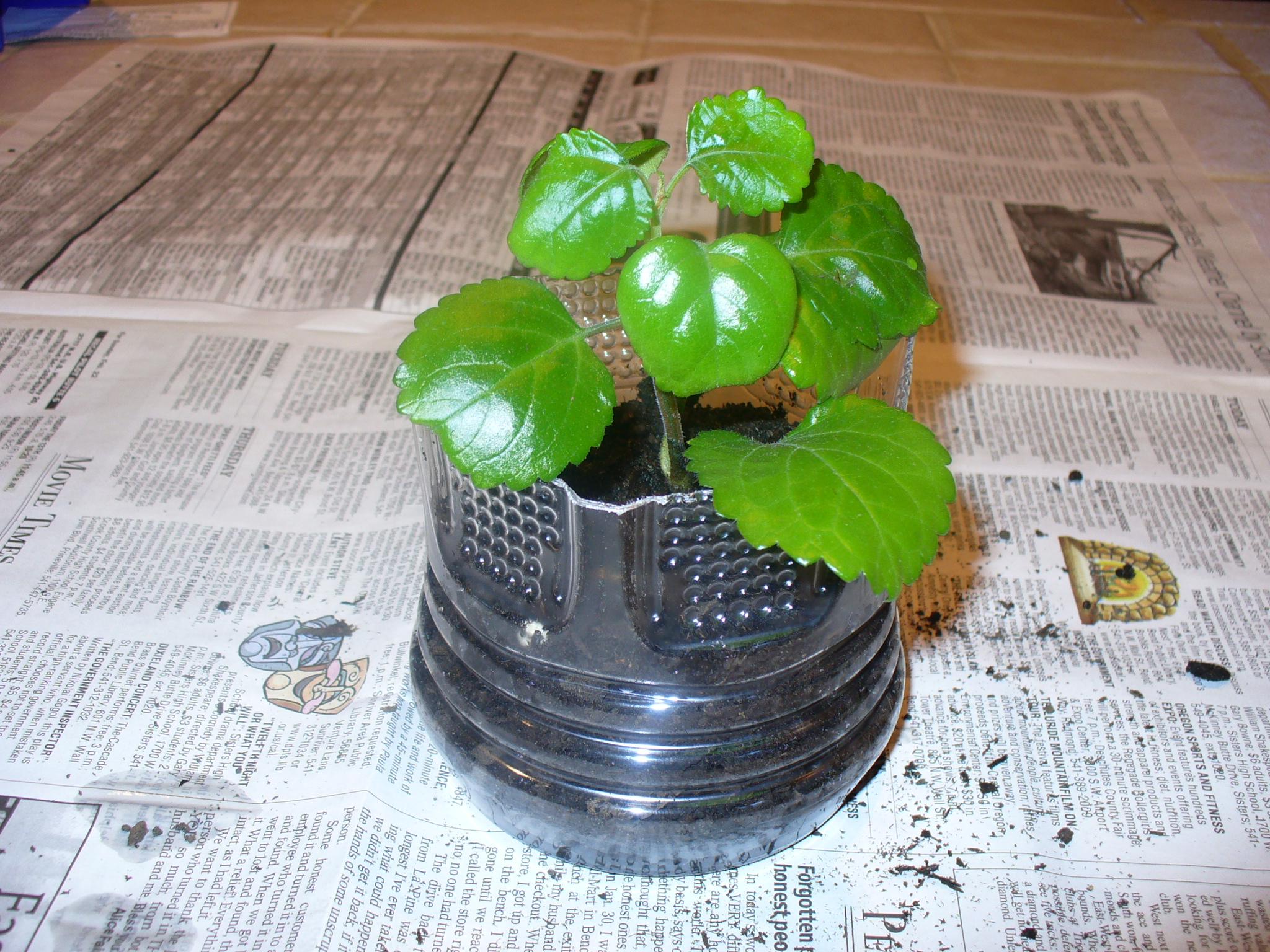 Recycled Plastic Bottle Plant Pot
