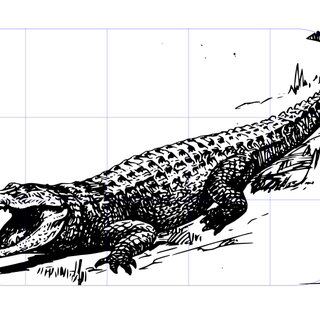 alligator screenshot.png
