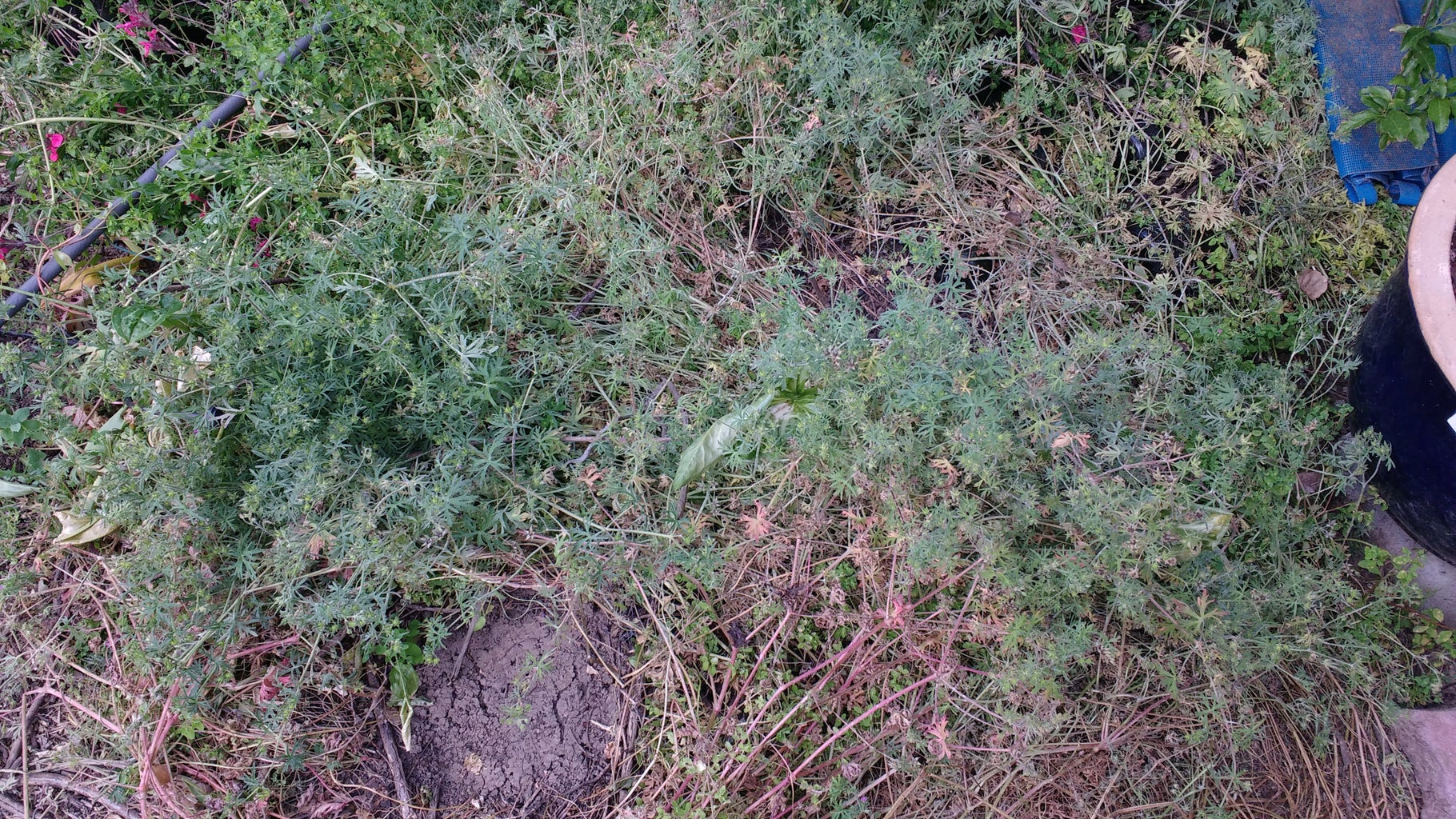 So Why Compost Weeds?