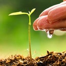 Soil Moisture Content Measurement Using Esp32 and Thingsio.ai Platform