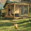 周末后院鸡舍