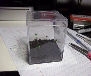 Small Plant Terrarium
