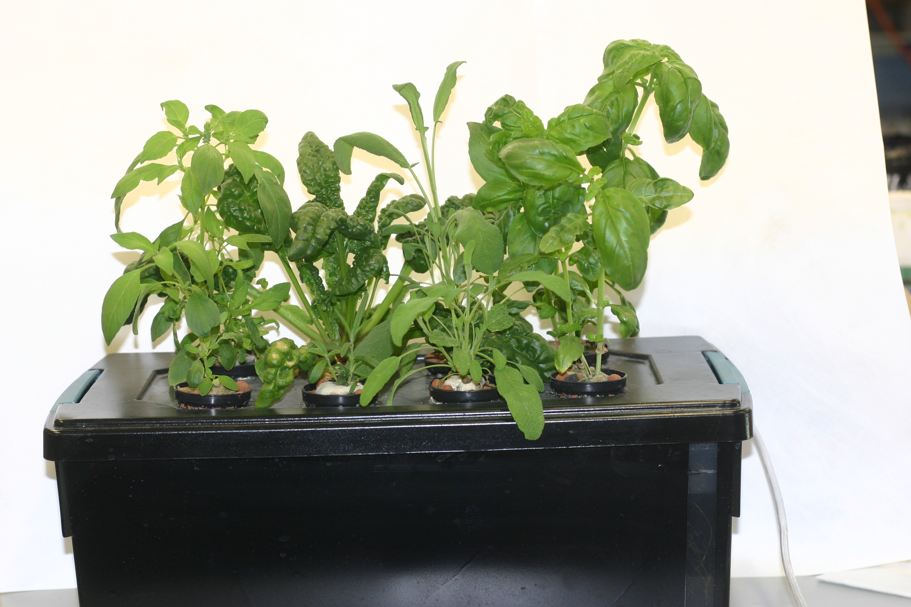 Home Made Windowsill Hydroponic Herb Garden