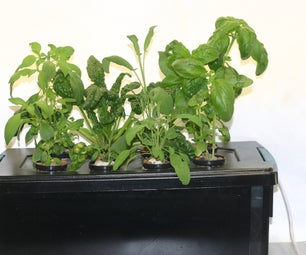 Home Made Windowsill Hydroponic Herb Garden