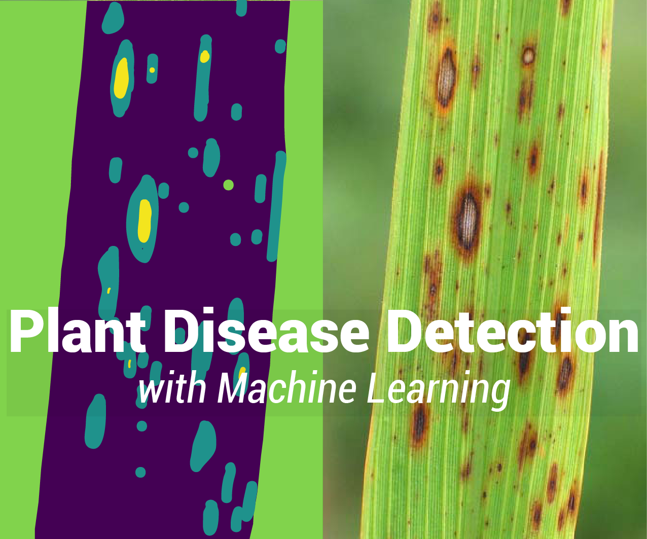 How to Detect Plant Diseases Using Machine Learning