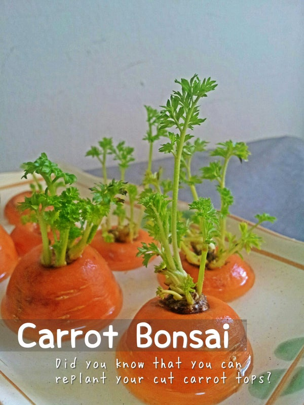 Carrot Bonsai