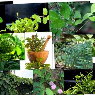 Identifying Edible and Medicinal Plants