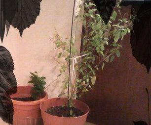 Winterize Your Plants