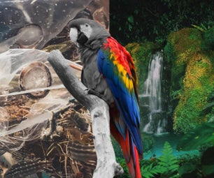 Photoshop Tutorial for Beginners: Pollution Parrot