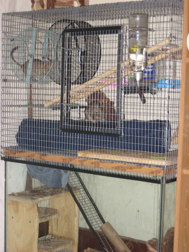 Degu Jeans/Denim Play Tube (Great for Rodents, Ferrets, Rats etc.)