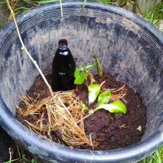 Reuse Bottle for Drip Irrigation