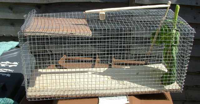 How to make a cheap and effective live rabbit trap