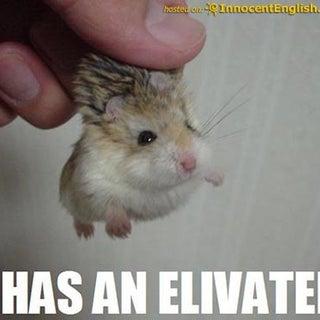 funny-hamster-pic.jpg