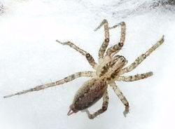 Spider Hunting!