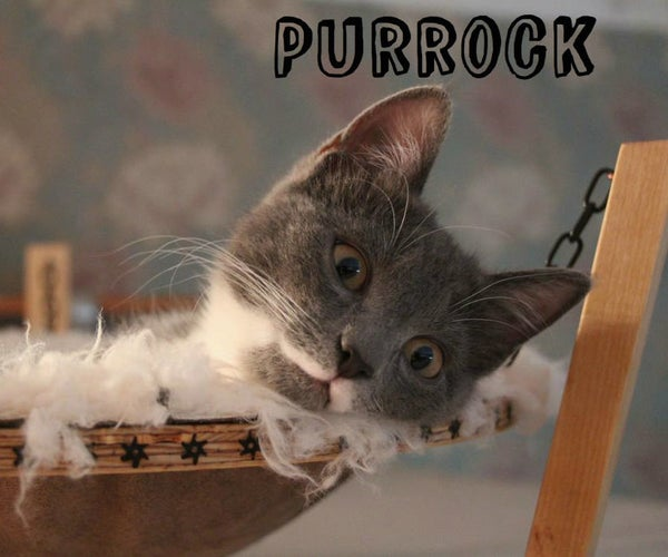 Purrock! Hammock for Your Purring Friend