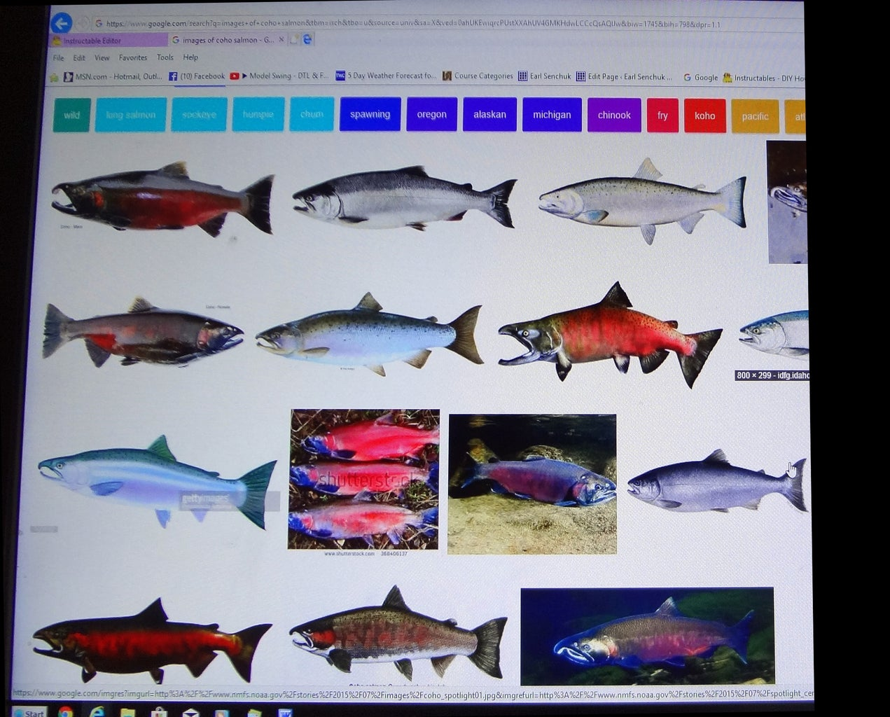Select Your Fish