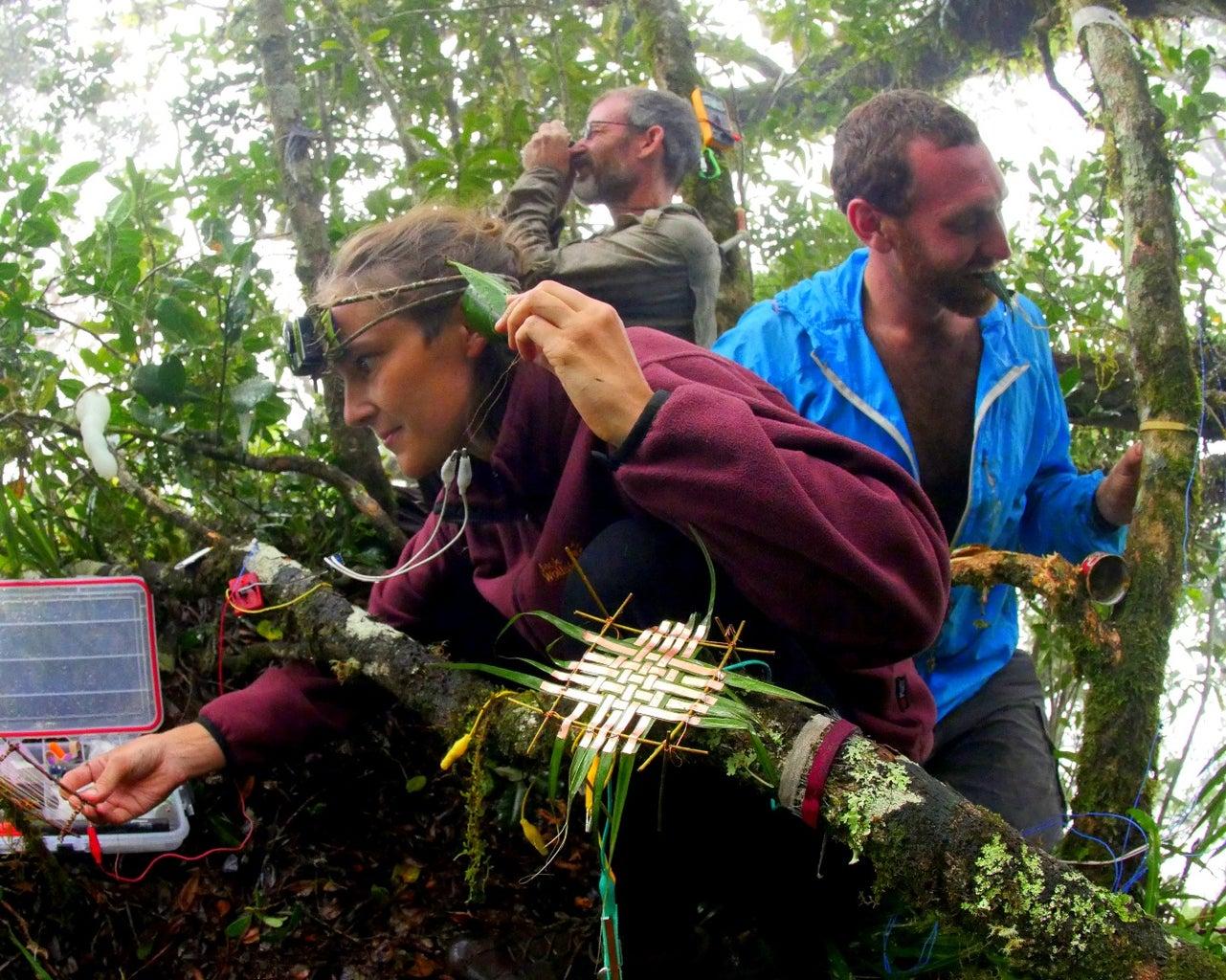 Background: Jungle Laboratories and Ant Sensors