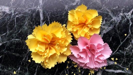 Make Your Carnation Flower Bloom!