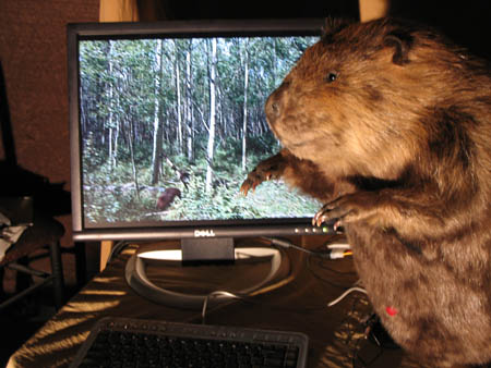 Compubeaver --> How to case mod a beaver - in 29 easy steps!