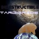 Silicone Cast Tardigrade