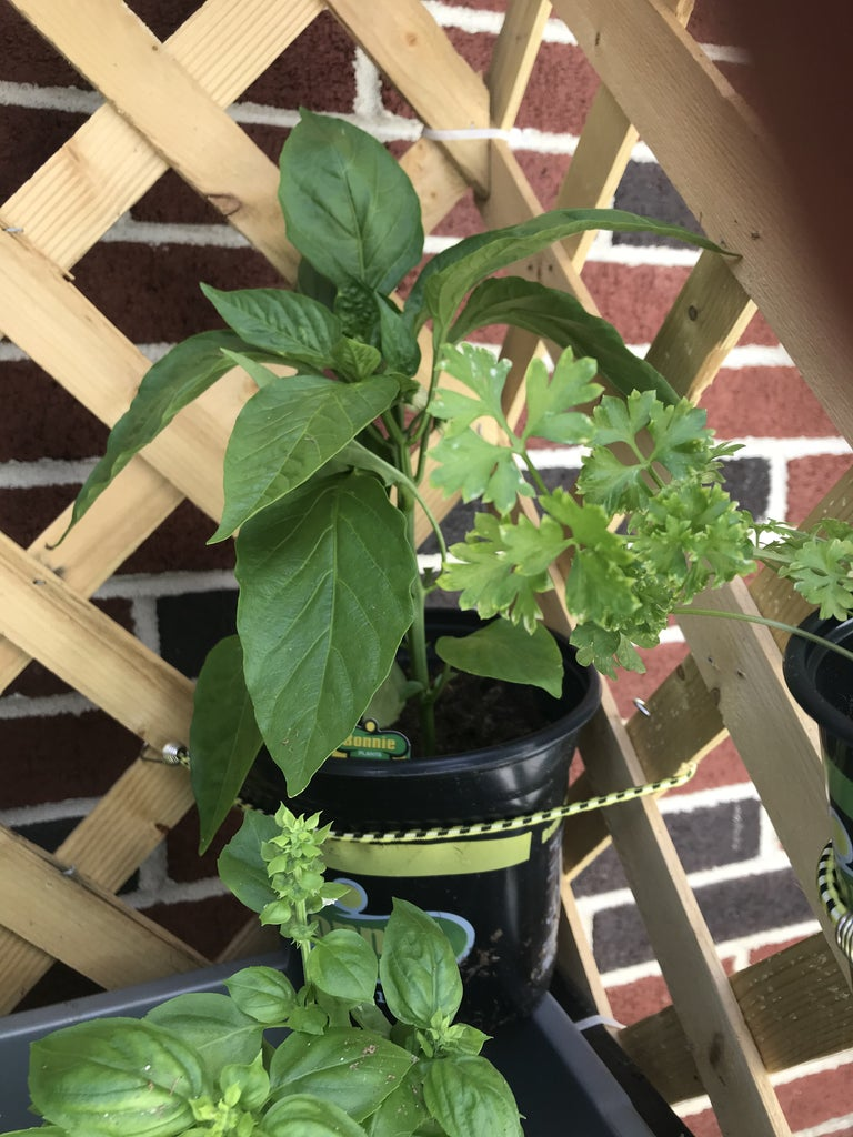 Layer Small Plants Using Elastic Cords (bungee)