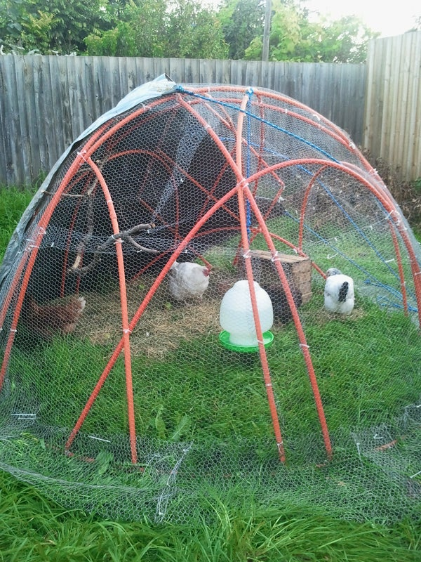 Chook Dome - Domestic Size