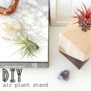 Air plant wood stand